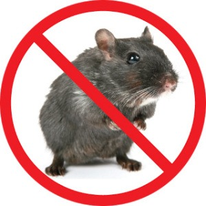 Stop Mice Infestations